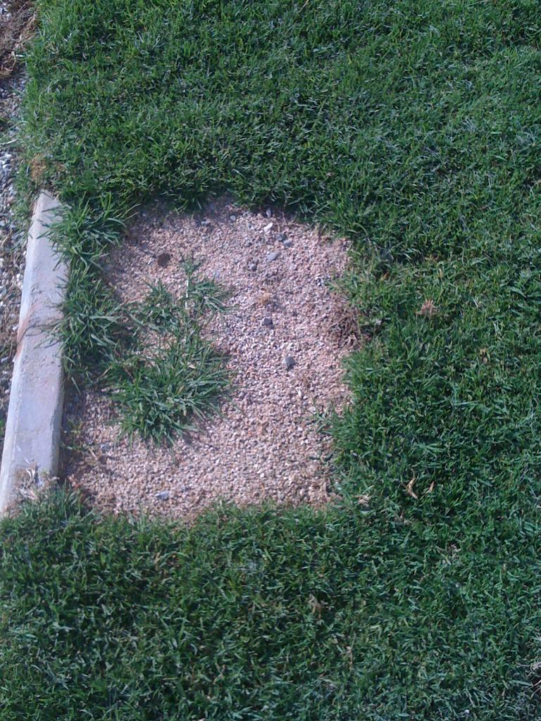 Q Grass Img 2437