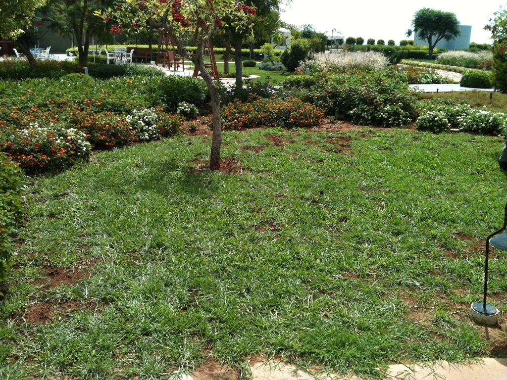 Como Fazer Requires Fe Roblox Void Sb Place 2 Youtube Q Grass 14