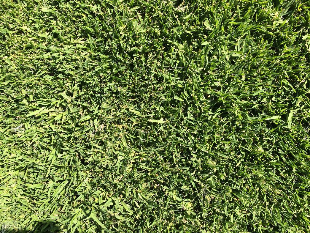 Superb Q Grass 33 Pabps2019 Chair Design Images Pabps2019Com